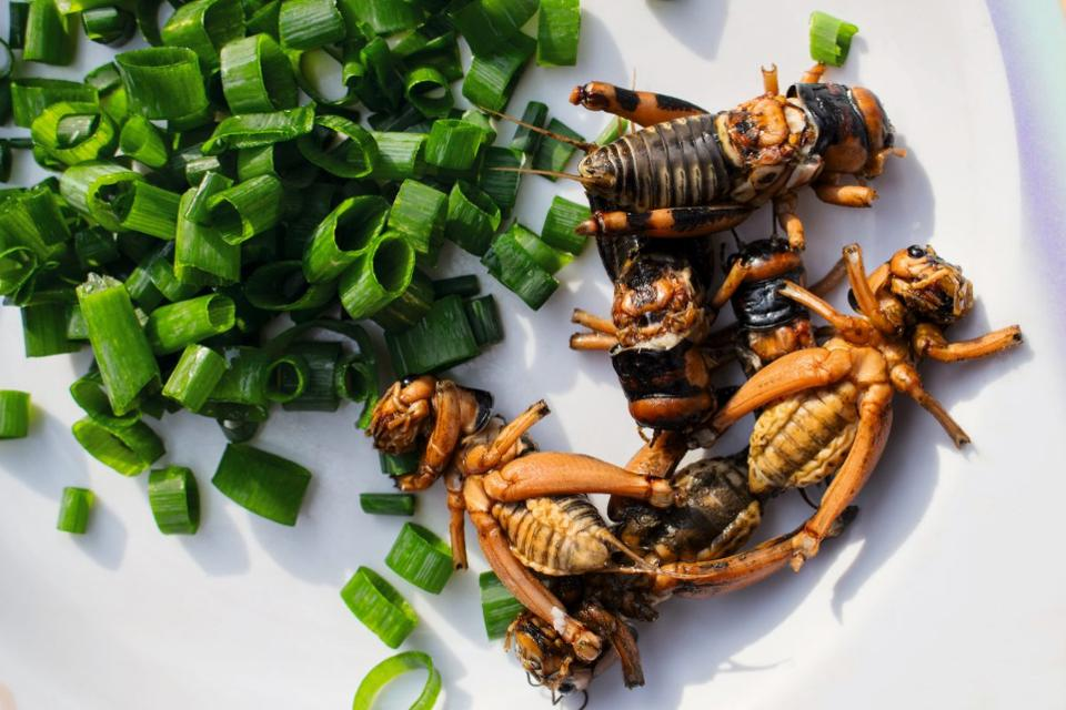 Most Of The World Eats Bugs; The Nordic Food Lab Thinks You Should, Too