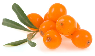 Seabuckthorn berry – A tropical tasting fruit from the North