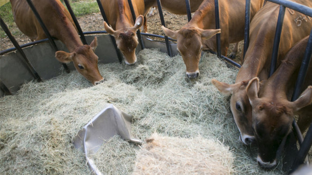 Essential oils in feed improve meat quality: study