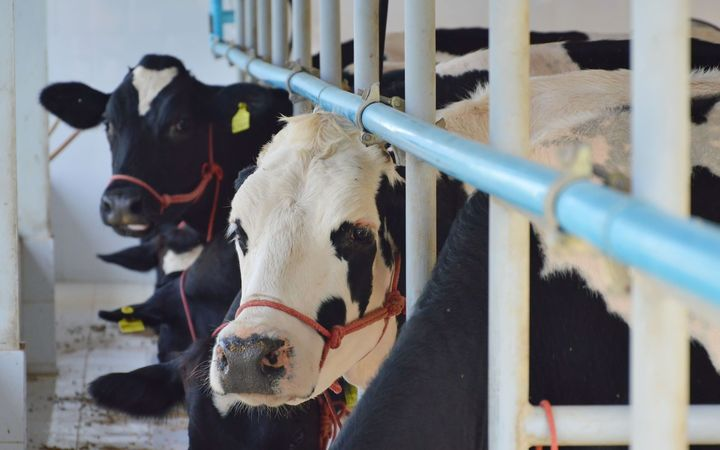 Butter pushes global dairy prices up – No problem, use Novotaste butter enhancers