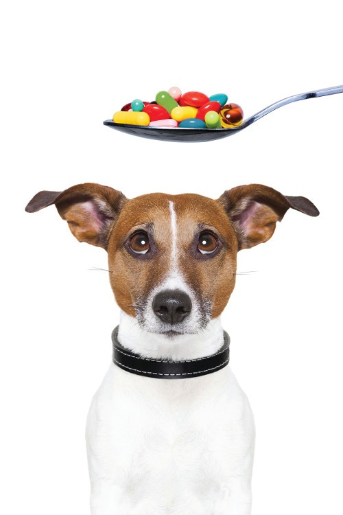 The Growing Pet-Supplements Market