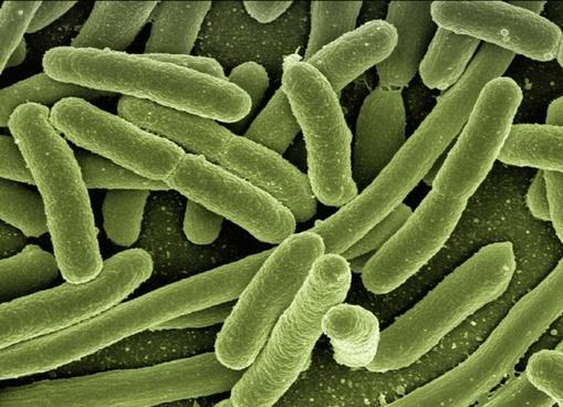 Antibiotics, biocidal cleaning products linked to multidrug resistance inMRSA