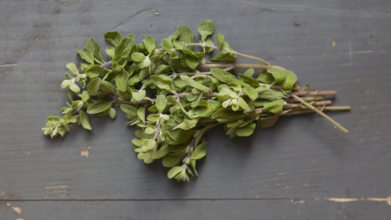 Is Oregano Oil A Good Natural remedy For Your Cold Symptoms?