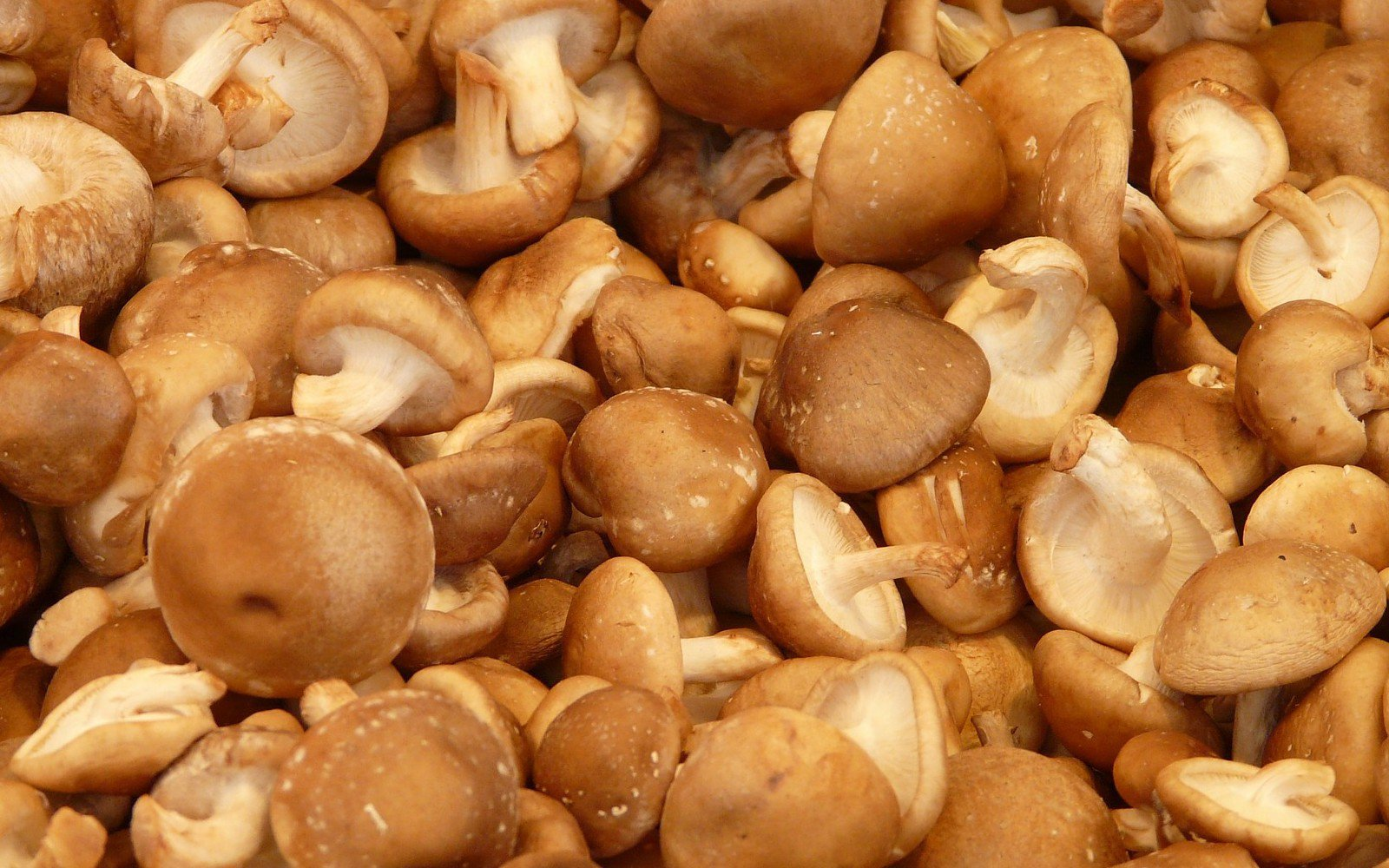 This Company Is Making Shiitake Protein That Is Comparable to Meat!