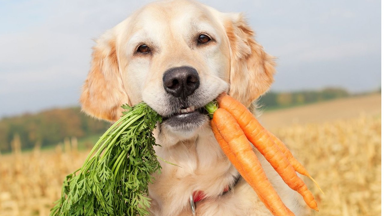 Even dogs are eating Quinoa now!