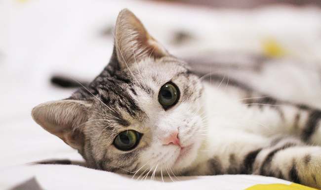 Startup to Make Lab-Grown Meat for Cats