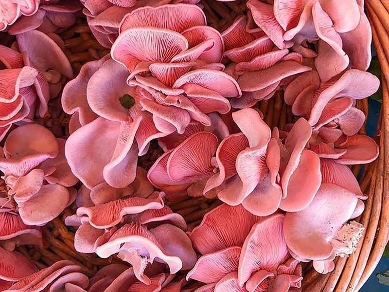 These Pink Mushrooms Are Sweeping the Internet – Cooking Light
