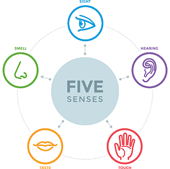 the five senses, sight, smell, taste, touch, and hearing illustrated