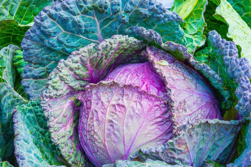Many of you mentioned that the smell of cabbage reminds you of home.