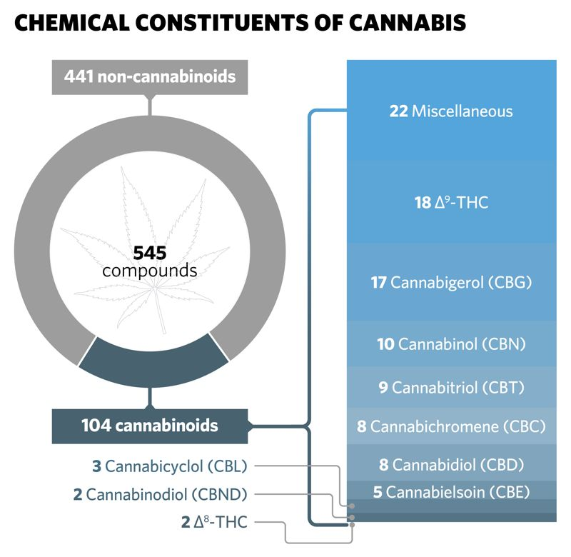 Diagram showing the chemical constituents of cannabis