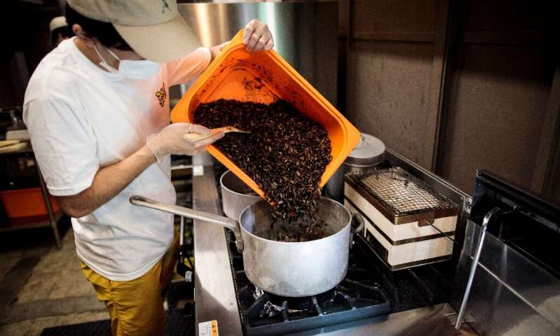 Japanese chef Yuto Shinohara has high hopes for a range of additional insect-based products, including beer made from crickets a