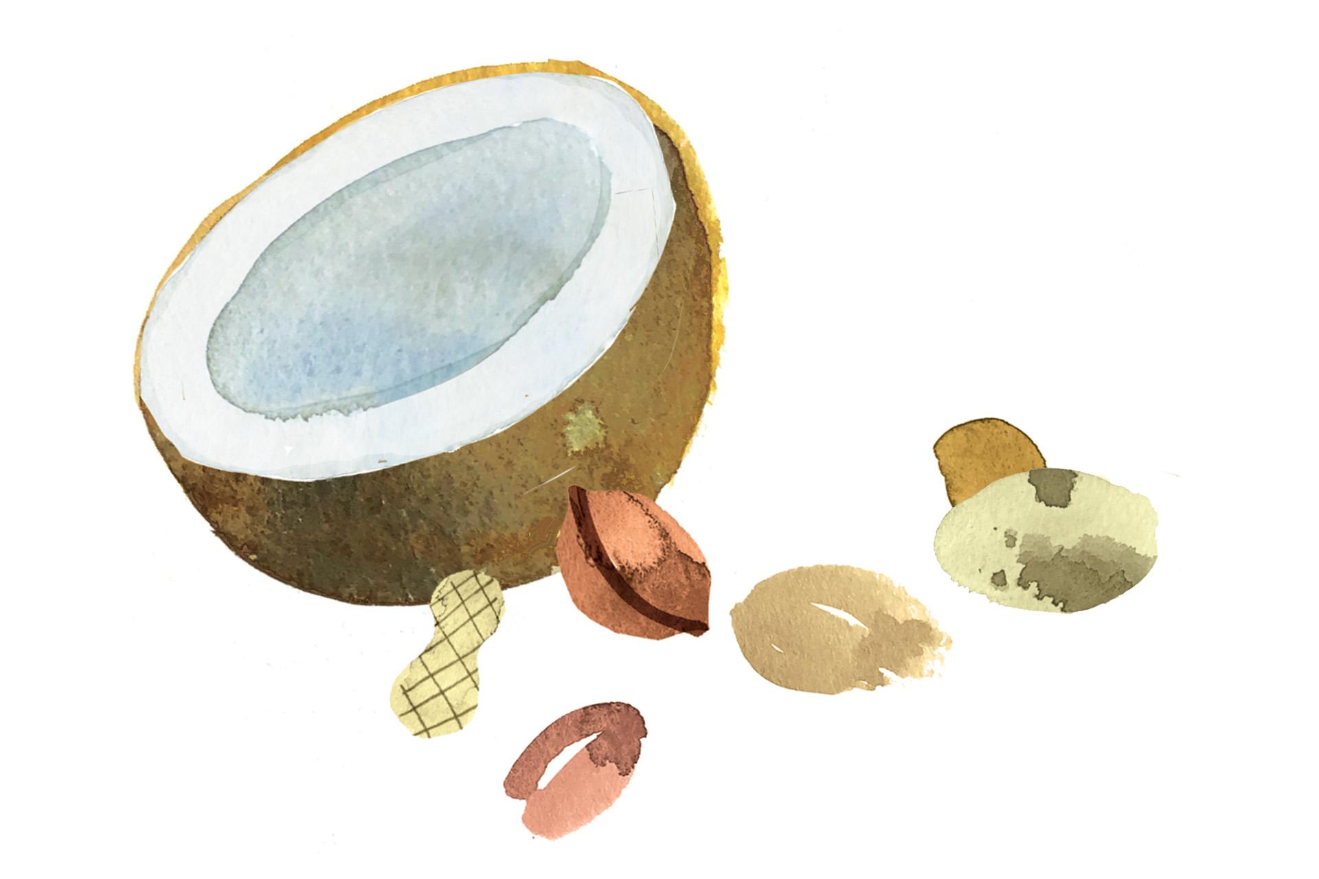 Illustration of coconuts