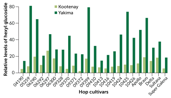 Graph of hexyl glucoside levels in hop cultivars