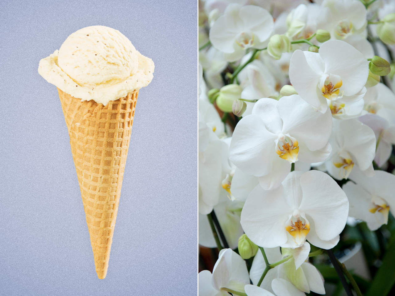 Wait—Am I the Only One Who Didn't Know Vanilla Comes from Orchids?   Yahoo