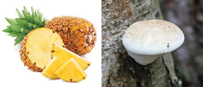 Edible fungus yields new pineapple flavor molecule   CEN.ACS.ORG