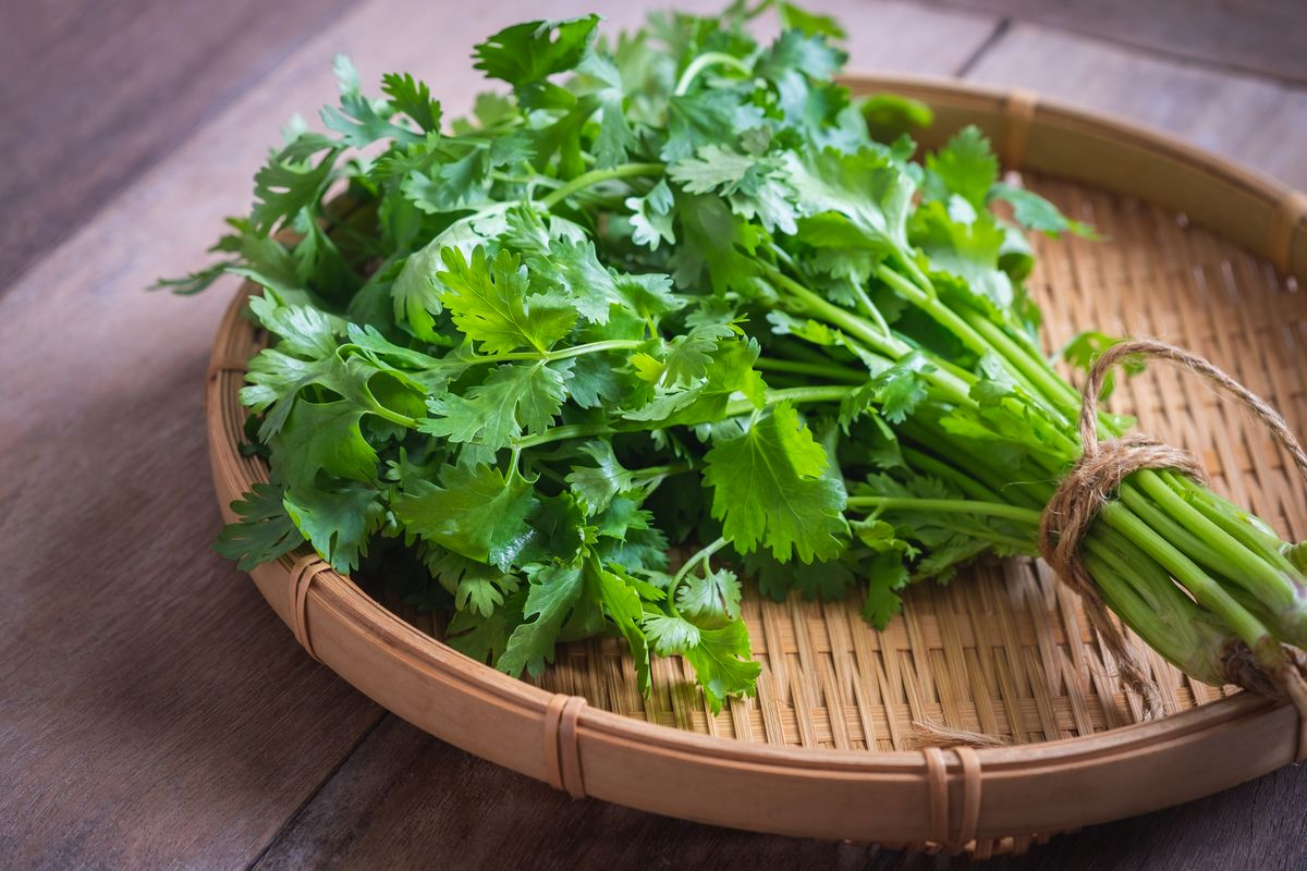 Coriander and cilantro pack plenty of flavor and a hearty nutrient punch | Chicago Sun-Times