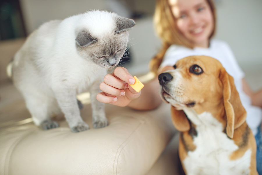 Pet Treat Trends: Snacking Isn't Just for Humans Anymore | Food Industry Executive