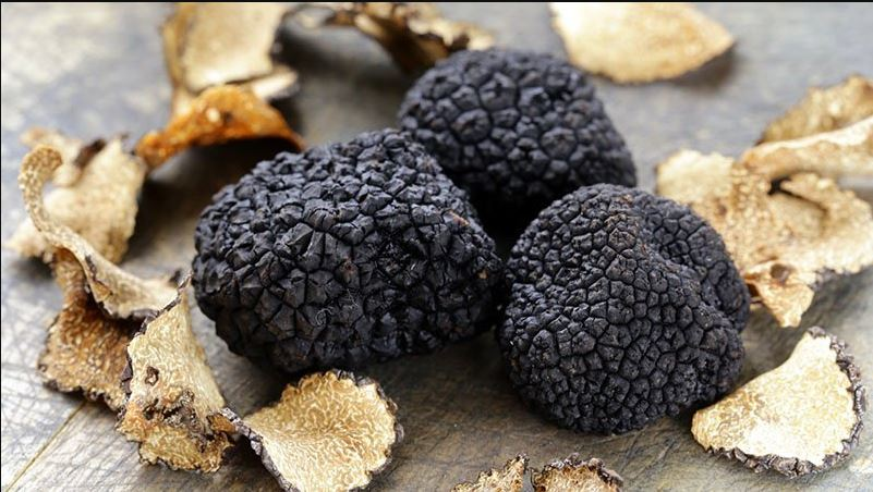 The Ultimate Guide to Truffles | The Trend Spotter