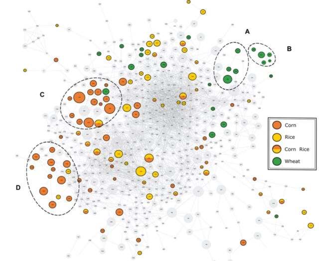 Mass spectral similarity network for chemical compounds in beers.