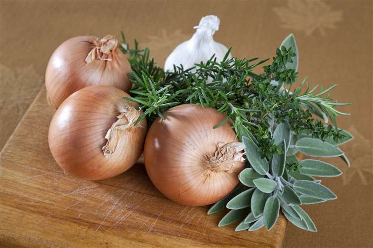 It's not the most pleasant scent but onion and garlic can deter spiders