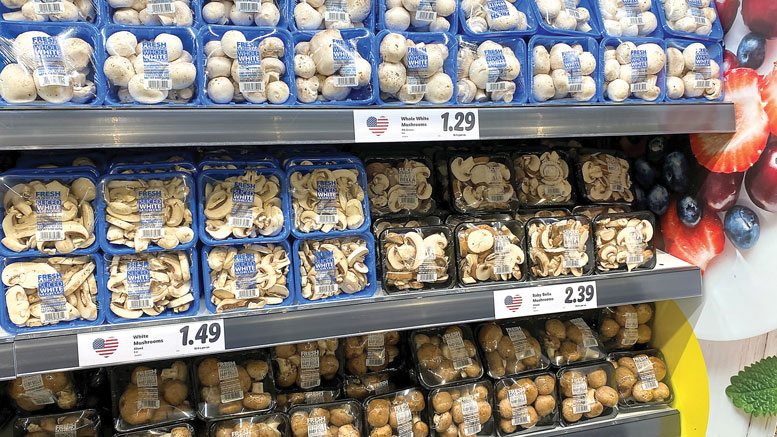 Year of The Mushroom | Produce Business